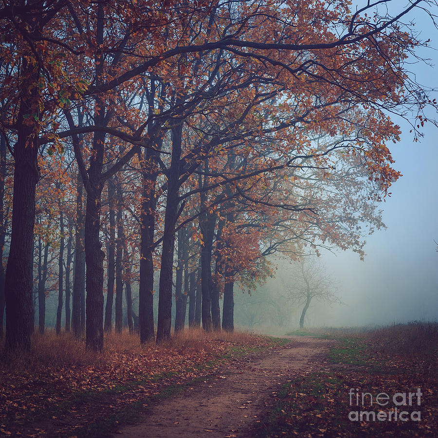 November Photograph - Toned Picture Of Sad And Mystery Autumn by Dioniya