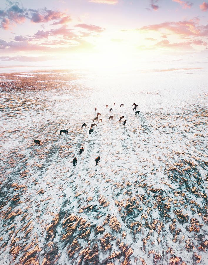 Top View Of Horses In Winter Photograph by Xuanyu Han