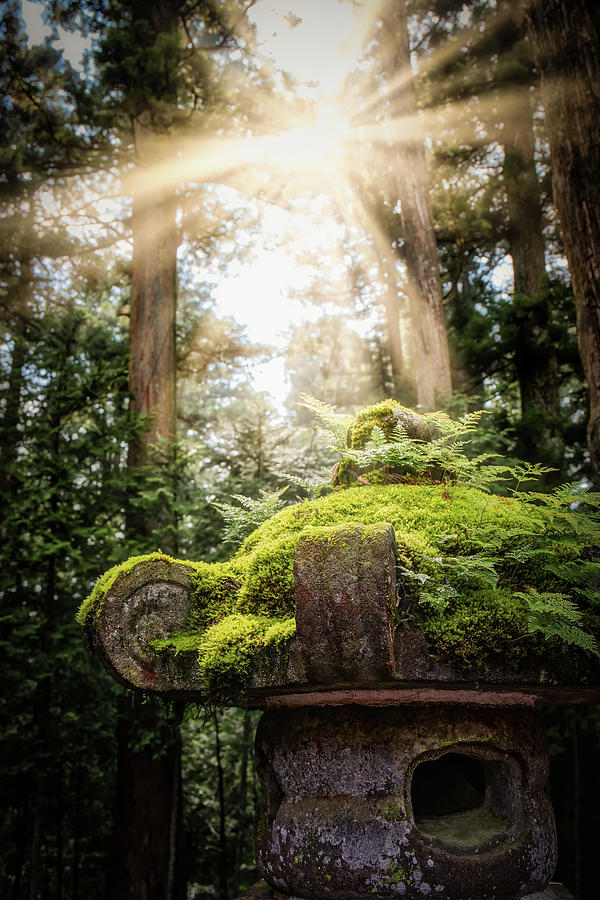 Toshogu Shrine Forest by William Chizek