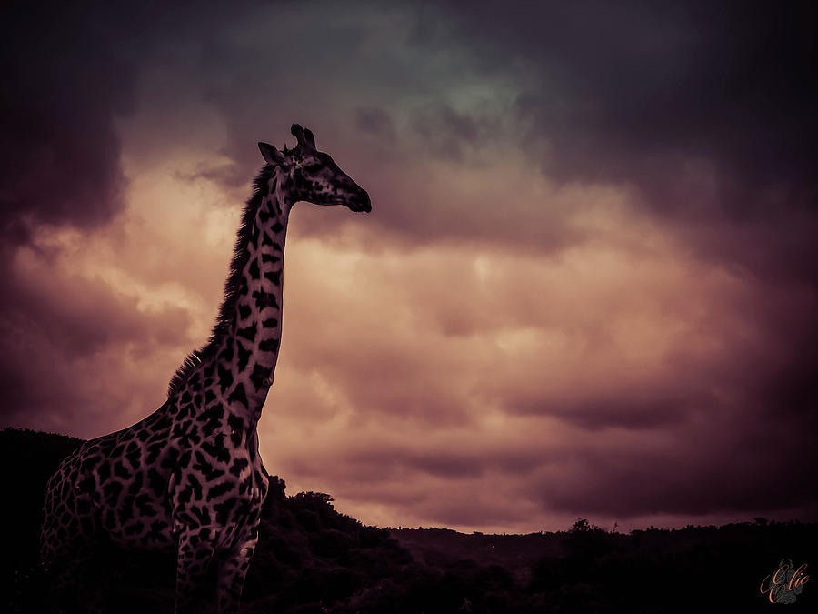 TOUCH THE CLOUDS by Elie Wolf