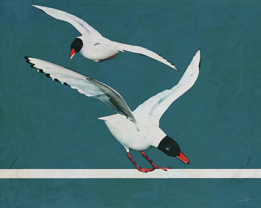 Touchdown of a black headed seagull by Jan Keteleer