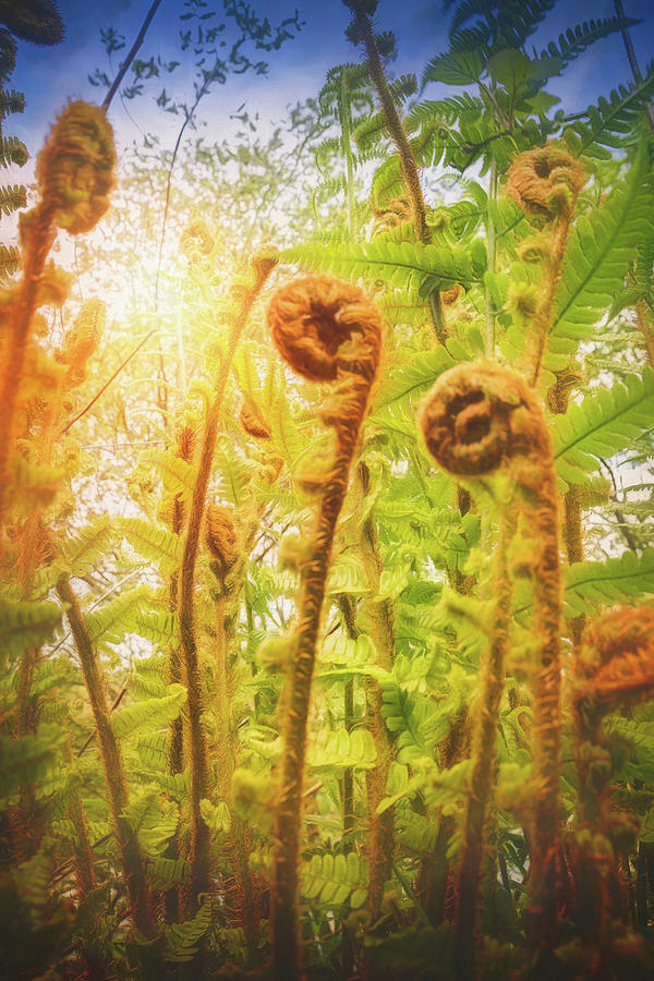 Towering Fern Photograph