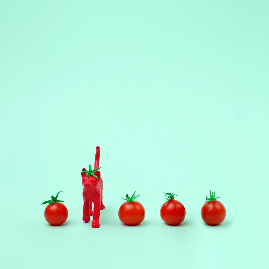 Kitten Photograph - Toy Cat Painted Like A Tomato In Row by Juj Winn