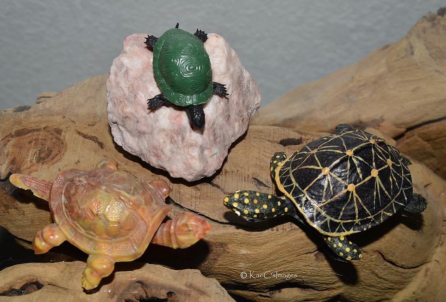 Toy Turtle Confab by Kae Cheatham