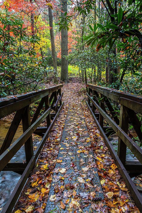 Trail in Autumn Leaves by Debra and Dave Vanderlaan