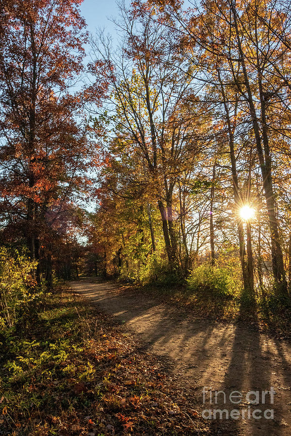 Autumn Photograph - Trail In Autumn by Nicki Hoffman