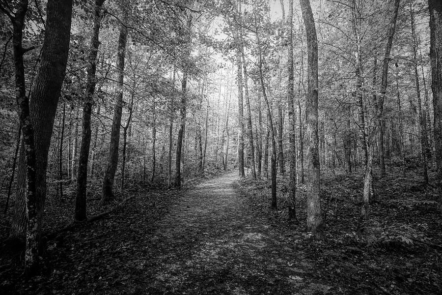 Trail To Elijah Oliver's Cabin Black and White by Judy Vincent