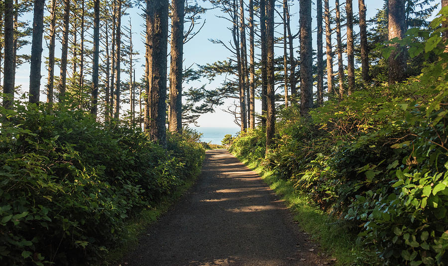Trail to the Sea by Kristopher Schoenleber