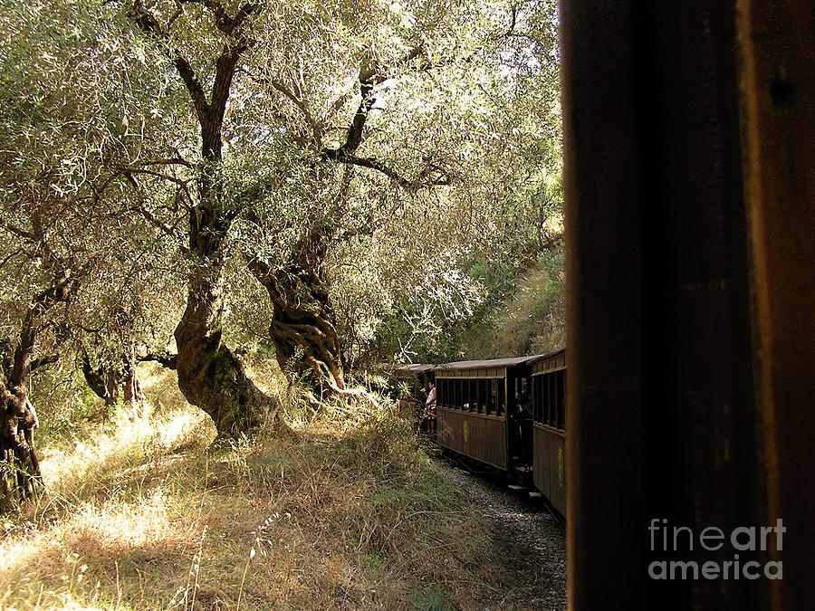 Train And Olive Trees Photograph