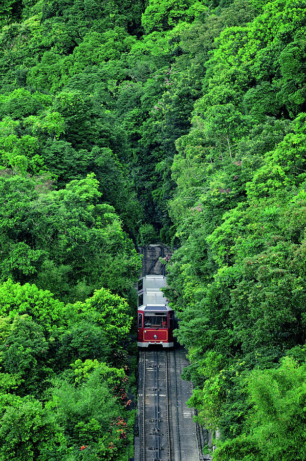 Train Passing Forest Photograph by Jacky Lee