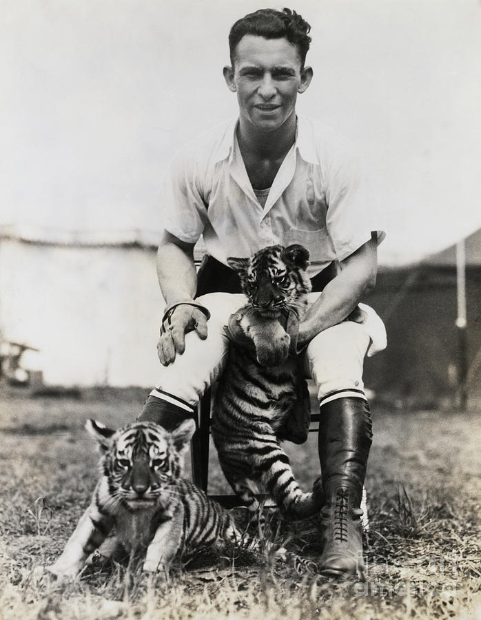 Trainer With Tiger Cubs Photograph by Bettmann