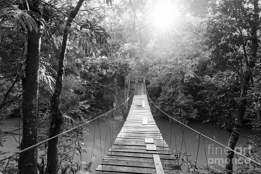 Tranquil Forest Footbridge Black and White by Tim Hester