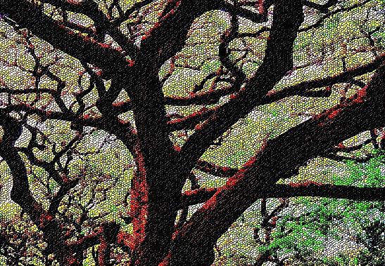 Tree 103 Version 4 Photograph