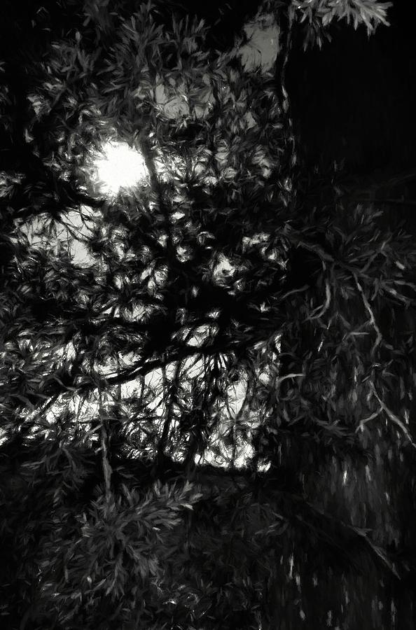 Tree 382 Photograph