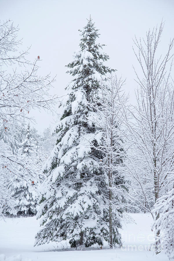 Tree And Snow Photograph