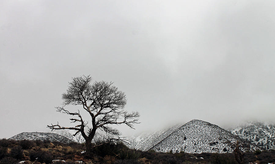 Tree and snow at the Little Colorado by Jonathan Thompson