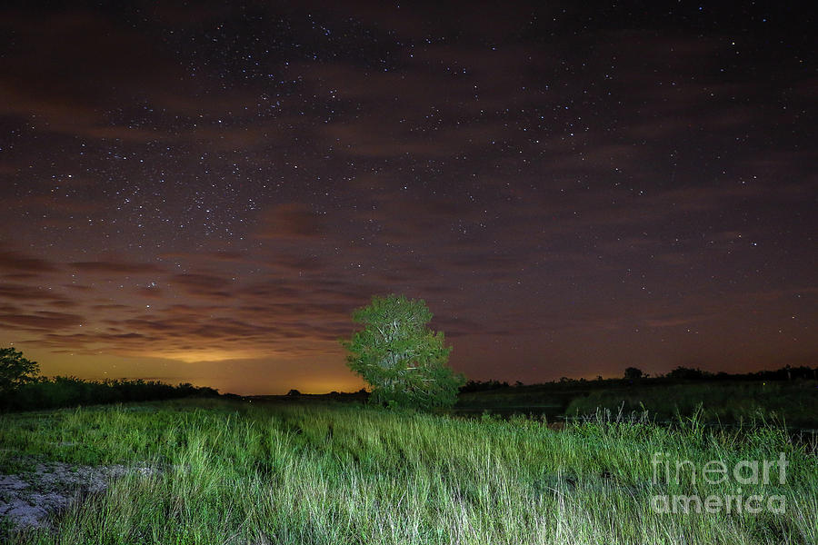 Tree and Starry Night by Tom Claud