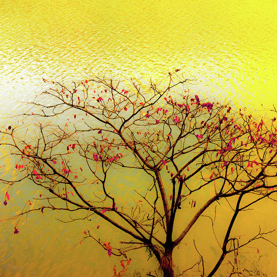 Tree and Water 2 by Le Comp