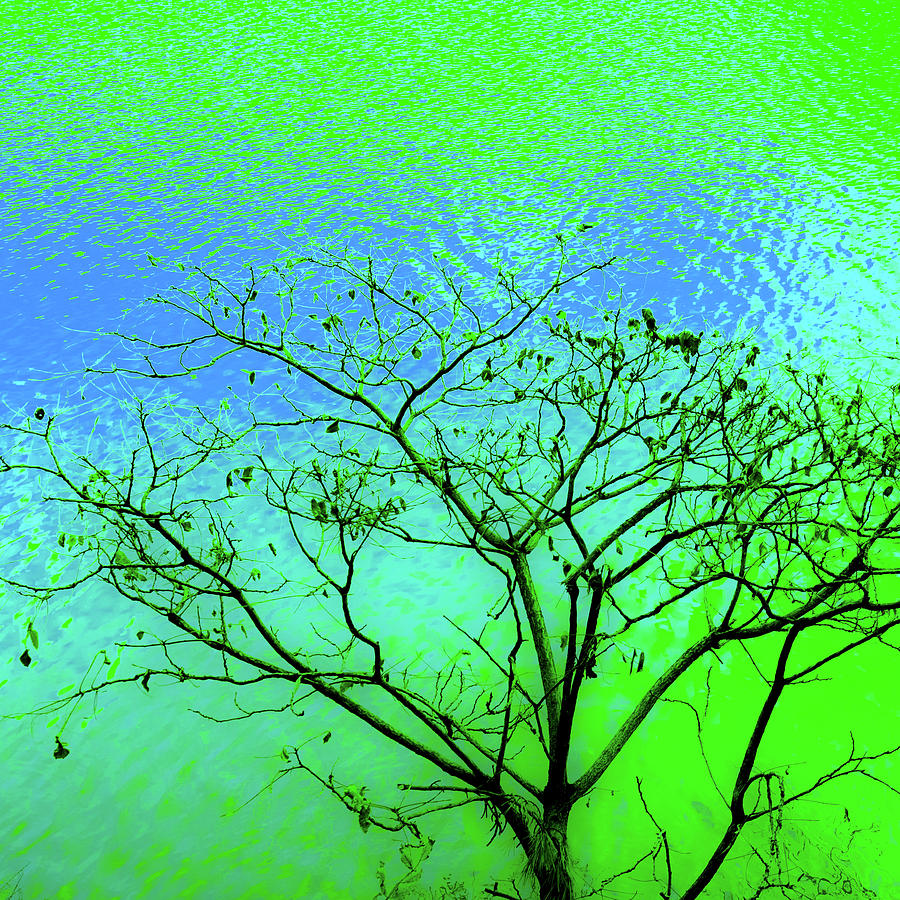 Tree and Water 3 by Le Comp