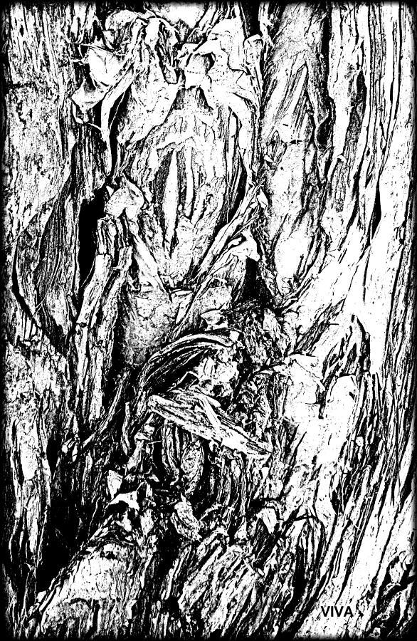 Tree Bark Beautiful-b-w by VIVA Anderson