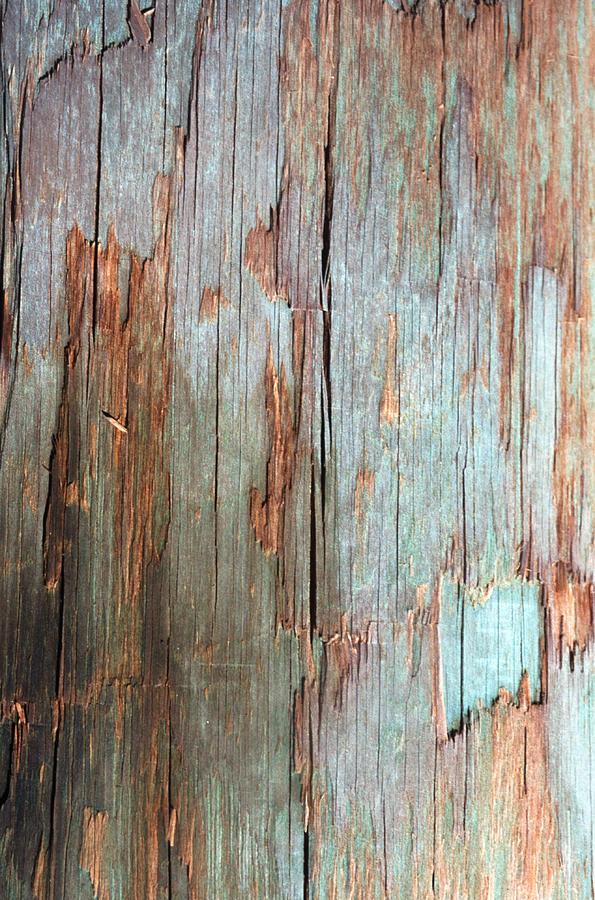 Tree Bark Photograph by John Foxx