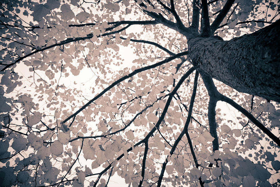 Tree Branches Photograph by Gianlucabartoli