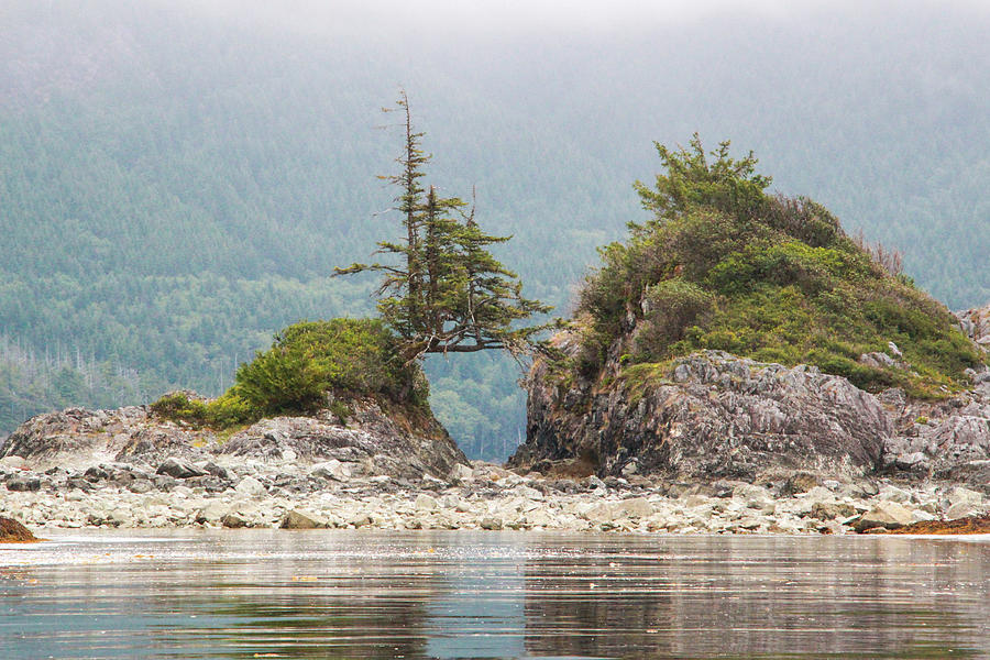 Tree Bridge Between Islands on a Foggy Day by Pacific Northwest Sailing