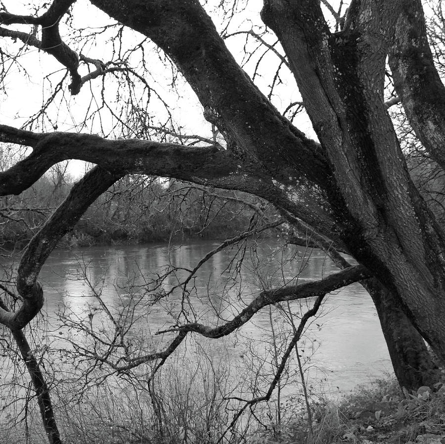 Tree by the River by Alina Avanesian