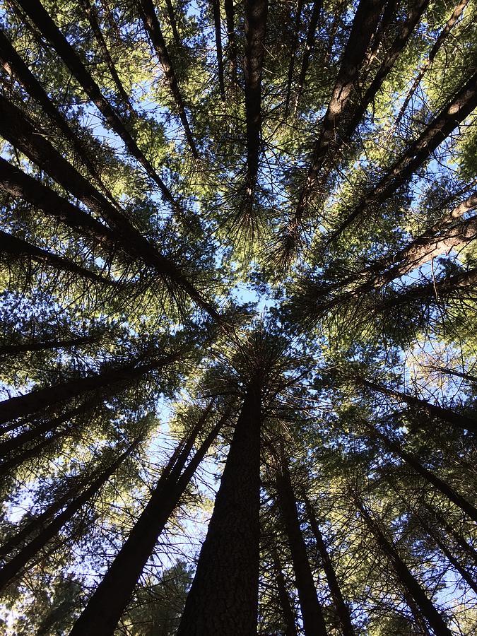 Tree Canopy by Marlene Challis