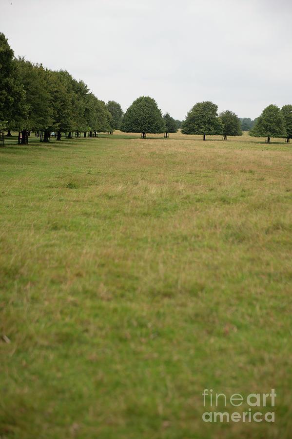 Tree collection photo 2 by Jenny Potter