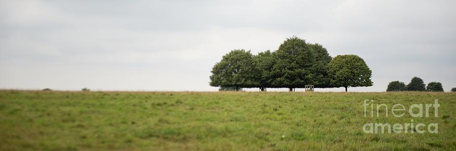Tree Collection photo 4 by Jenny Potter