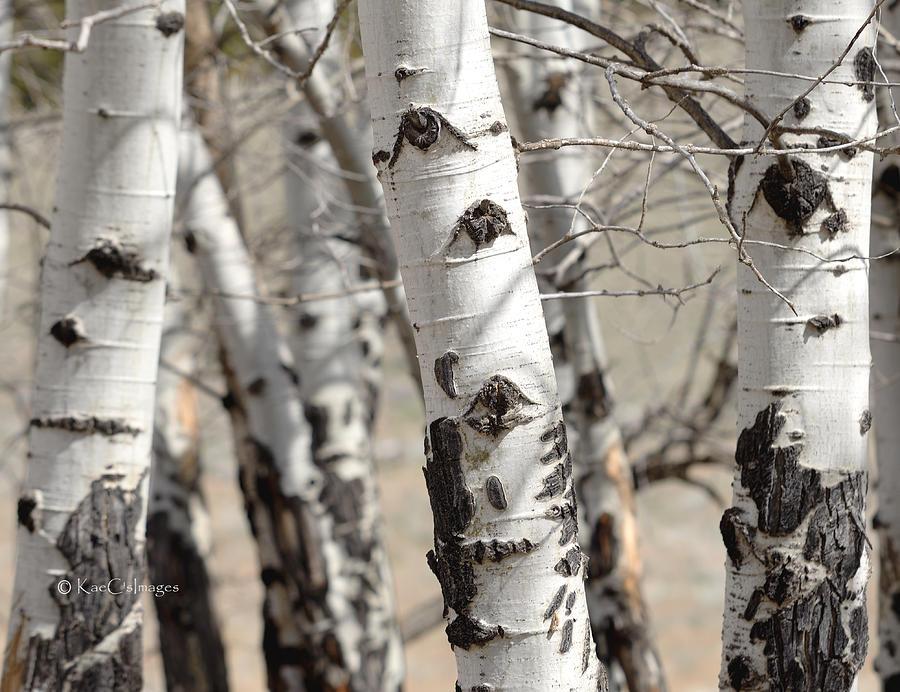 Tree Eyes by Kae Cheatham