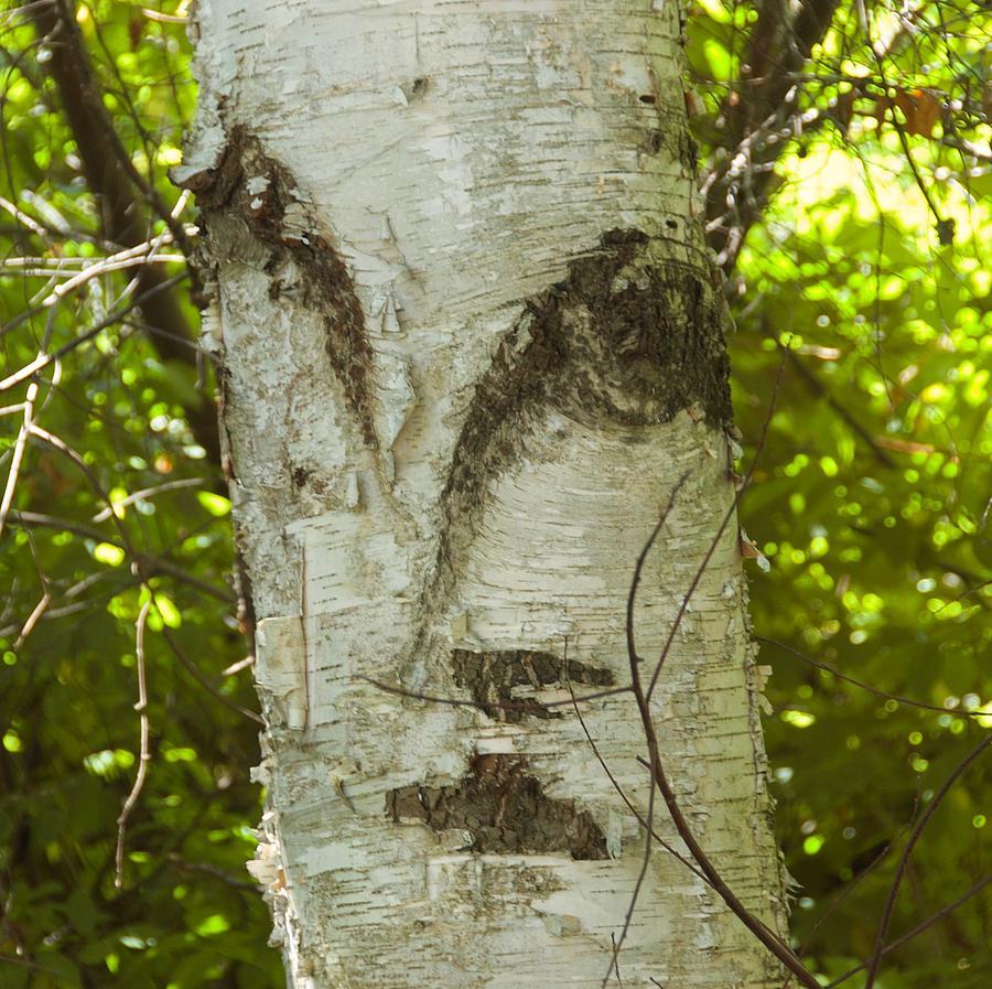 Tree Photograph - Tree Face by Marty Klar