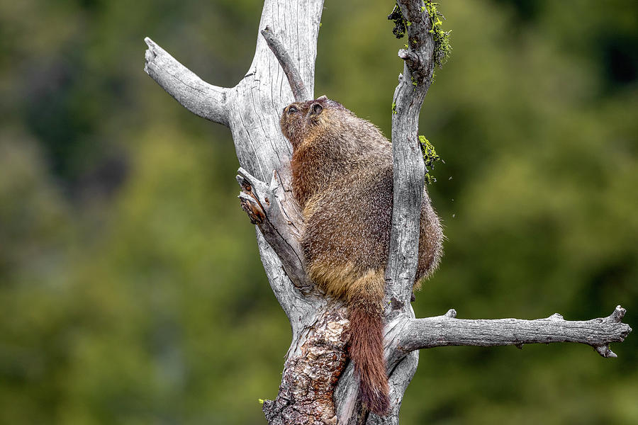 Tree Hugger by Ronnie and Frances Howard