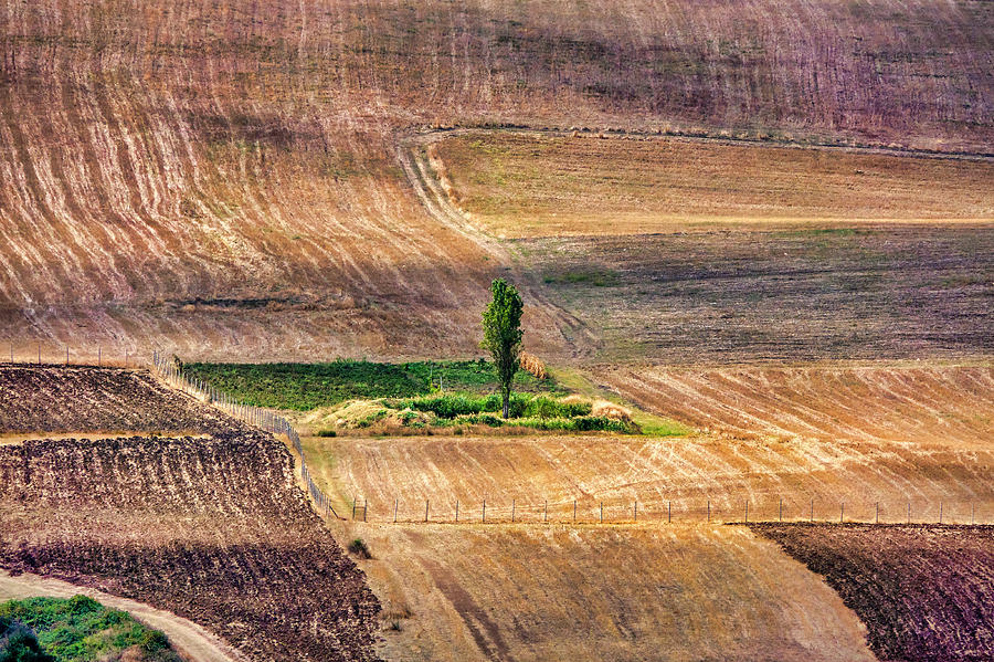 Tree in an harvested wheat field by Fabrizio Troiani