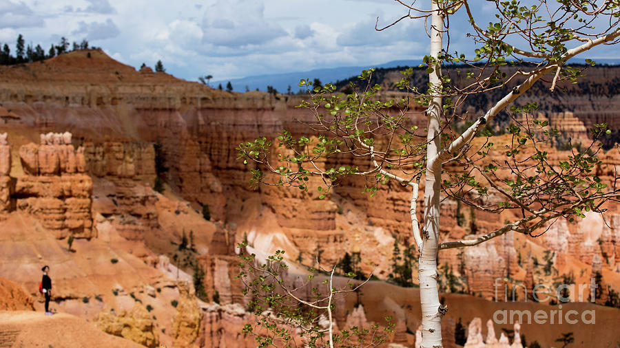 Tree in Bryce Canyon by Agnes Caruso