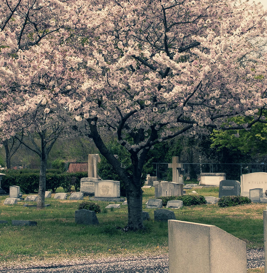 tree in cemetery  by Rose Benson