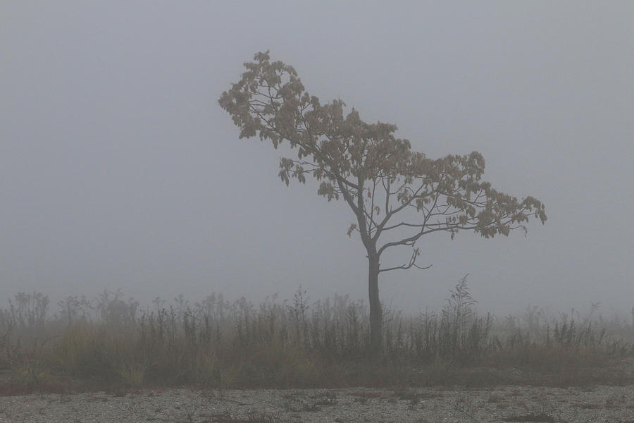 Tree in Fog by William Selander