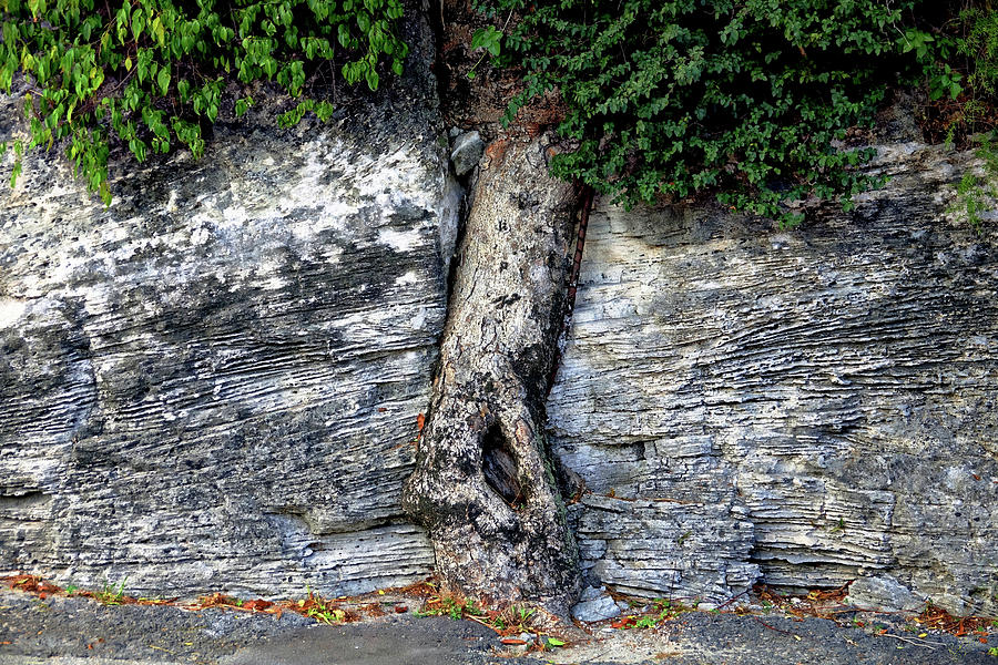Tree Photograph - Tree In Stone by Rick Lawler