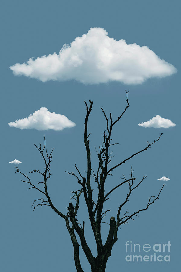 Tree in the Clouds by David Lichtneker