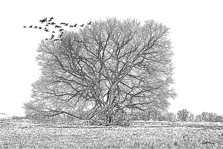 Tree in the Field 090 - Sketch by Ericamaxine Price