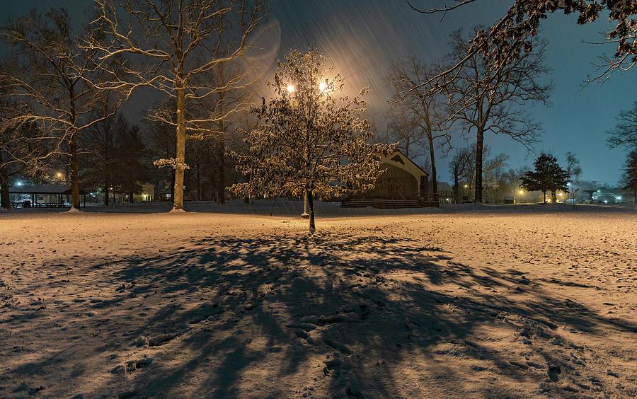 Tree in the Snow by Jonny D