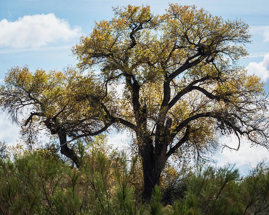 Tree by Juliana Swenson