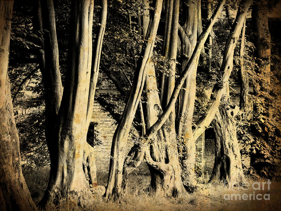 Tree Line by Jurgen Huibers