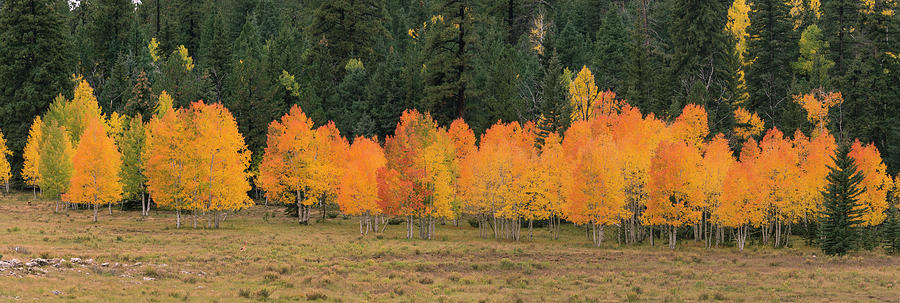 Tree Line by Michael Monahan