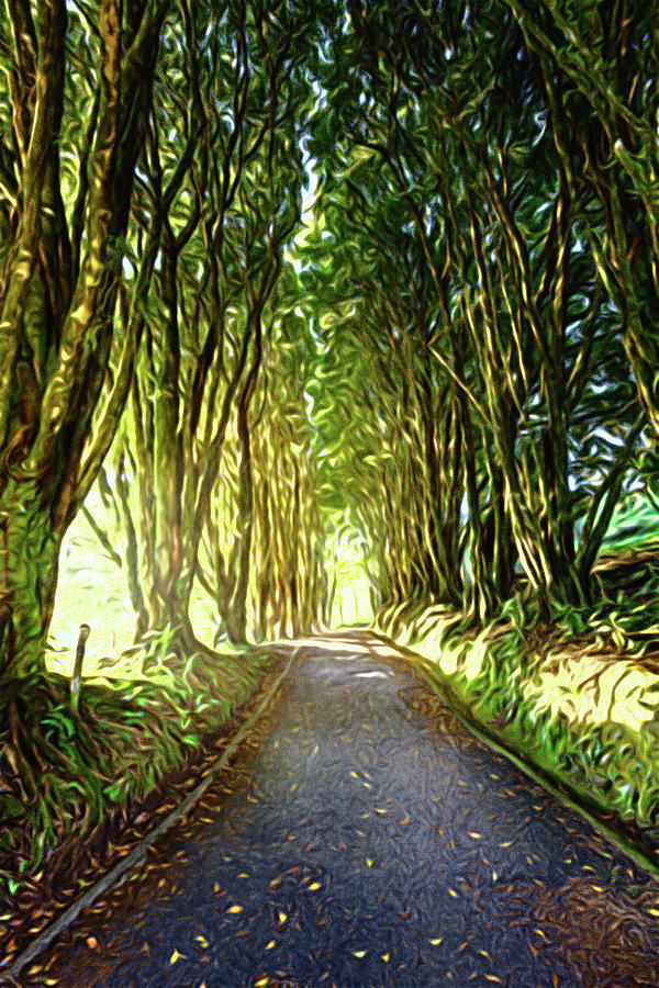 Tree-lined Alley Photograph
