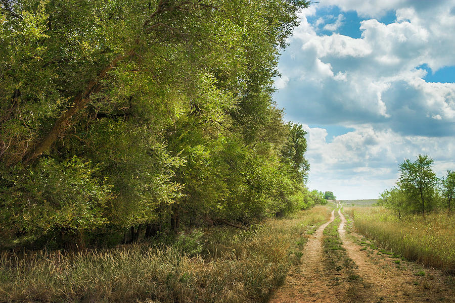 Tree-lined West Texas Meandering Dirt Photograph by Dszc