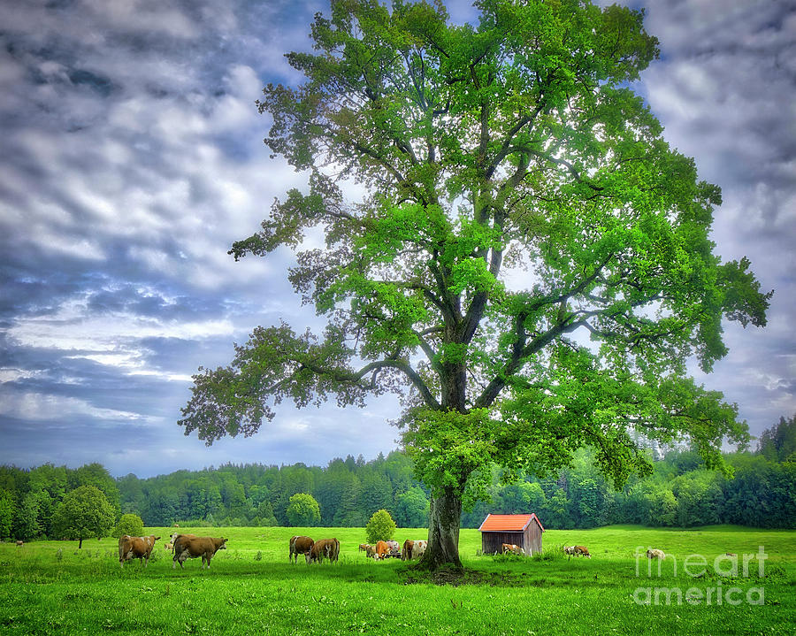 Tree of Life by Edmund Nagele