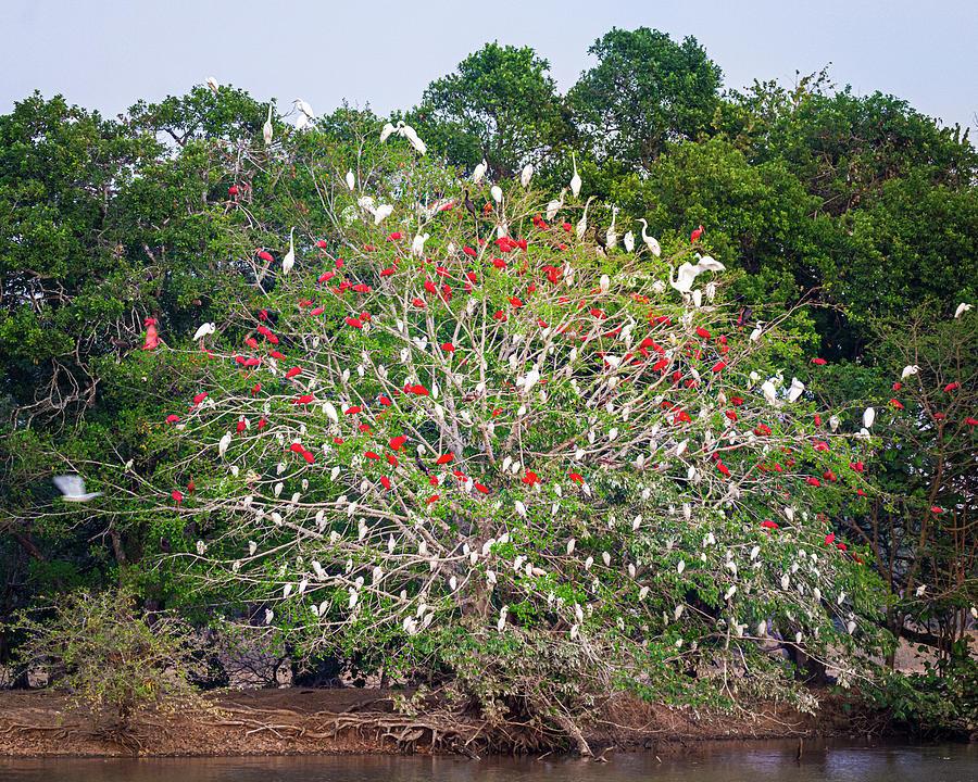 Tree of Life Hato Berlin Casanare Colombia by Adam Rainoff