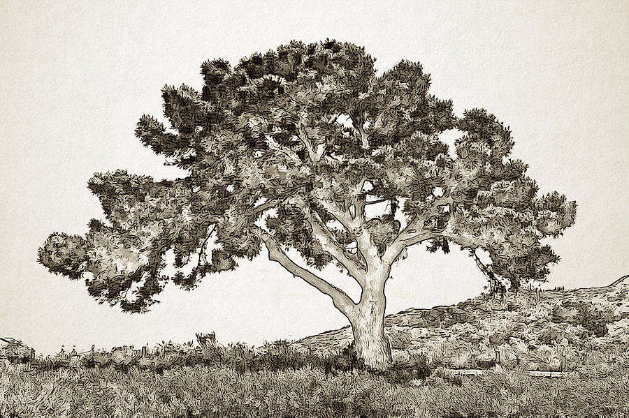 Tree of Life Sketch by Alison Frank